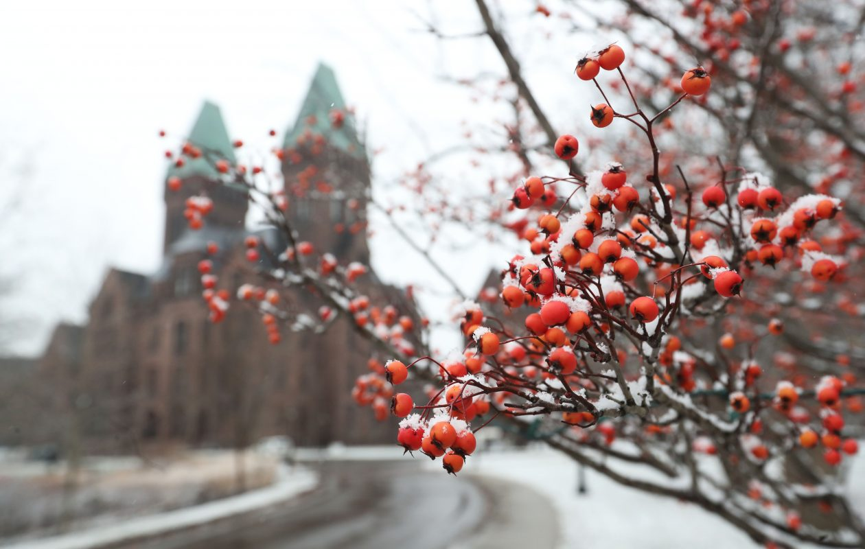 Crabapples covered with snow are on the grounds of the Richardson Olmsted  Complex in December. (Sharon Cantillon/Buffalo News)