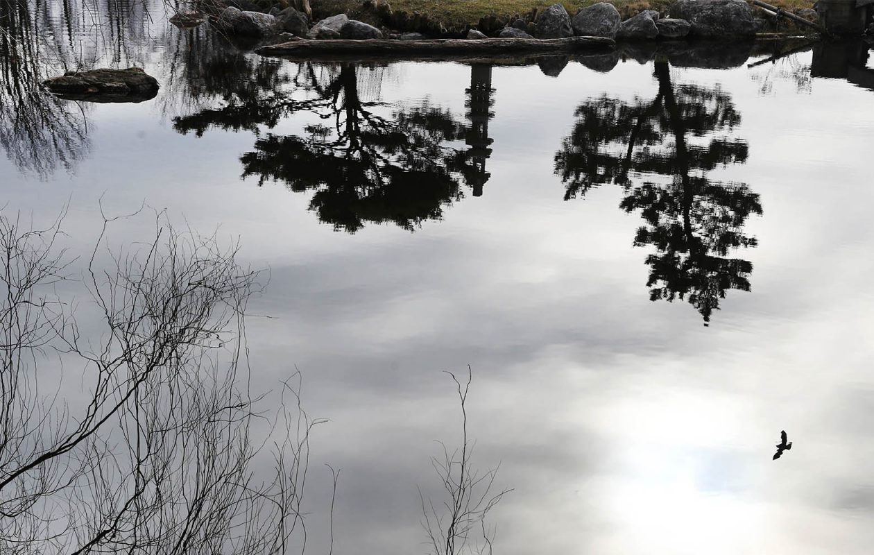 It'll be another snowless January day today, forecasters at the National Weather Service projected. Pictured here are reflections of trees on Hoyt Lake behind the Buffalo History Museum. (Sharon Cantillon/Buffalo News)