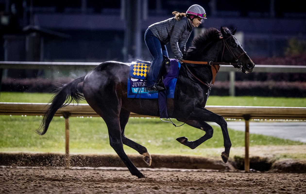 October 30, 2018 : Much Better looks to transition from turf to dirt in this weekend's Sham Stakes at Santa Anita.  (Evers/ESW/CSM /Breeders' Cup)