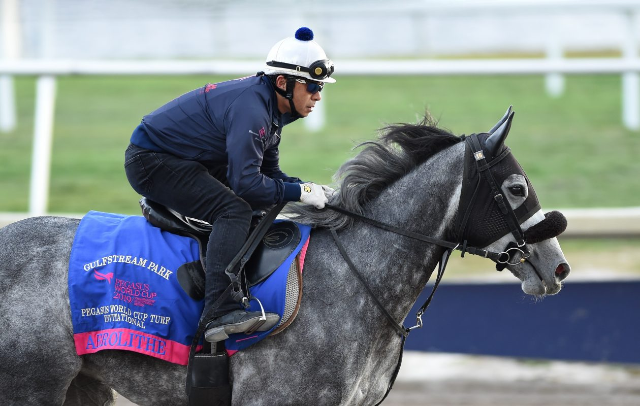 Japanese invader Aerolithe will try the Pegasus World Cup Turf on Saturday. Photo Credit: Lauren King/Gulfstream