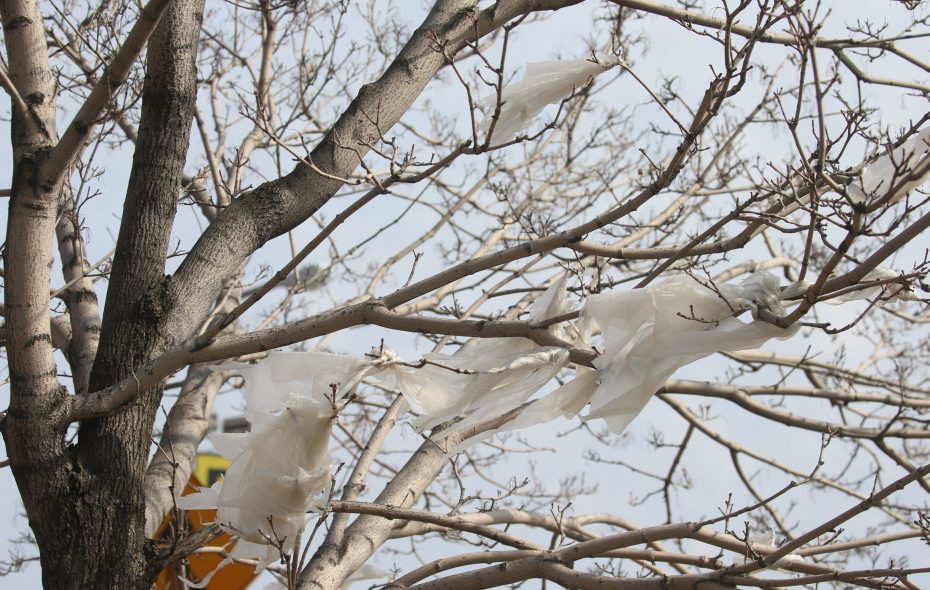 Plastic bags, like these stuck in a Seneca Street tree, would be banned under a bill proposed by Gov. Andrew M. Cuomo for the second year in a row. (John Hickey/News file photo)