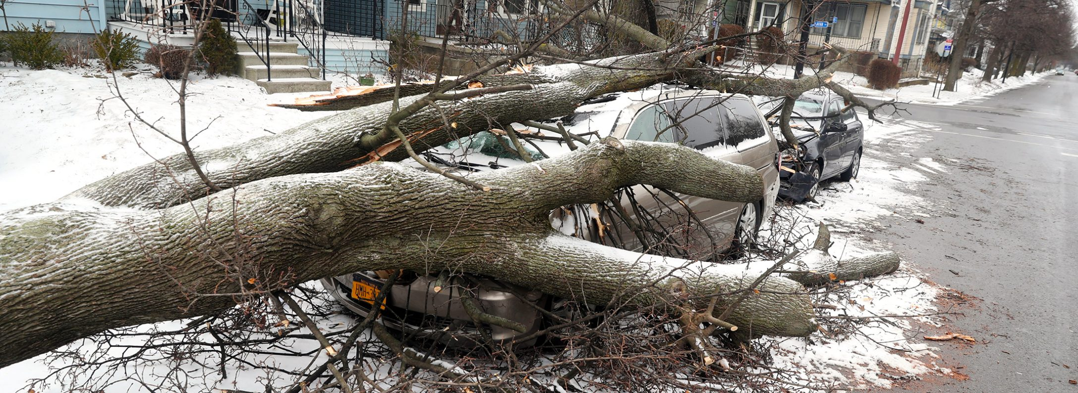 Winds took down a tree, which damaged two cars, at Baynes Street by West Delavan Avenue in Buffalo.   (John Hickey/News file photo)