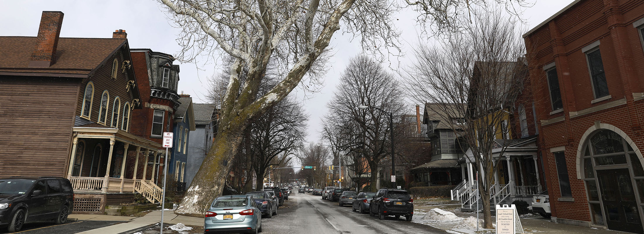 This sycamore tree on Franklin Street near Edward is considered to be the oldest tree in Buffalo. (Derek Gee/Buffalo News)
