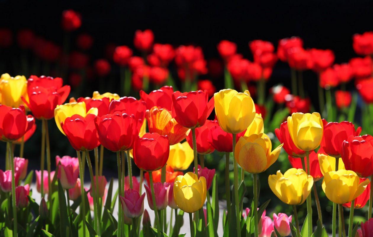Flowers make us happy.   (Sharon Cantillon/News file photo)