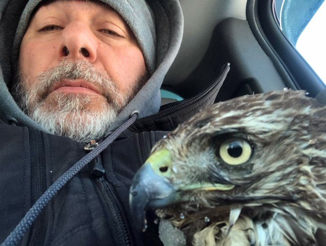 Amherst highway laborer Tim Boyle poses with a red-tailed hawk that he rescued after finding it in the snow in Snyder on March 5. (Photo courtesy of the Amherst Highway Department)