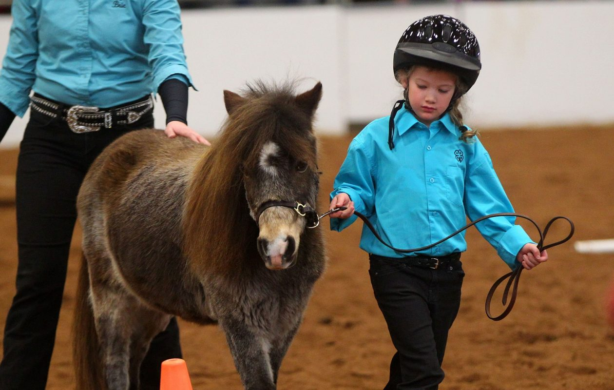 Abigail Verratti, of the Niagara County Little Bits 4-H, guides her mini horse Mr. T during a demonstration at Equifest 2017.  (Mark Mulville/News file photo)