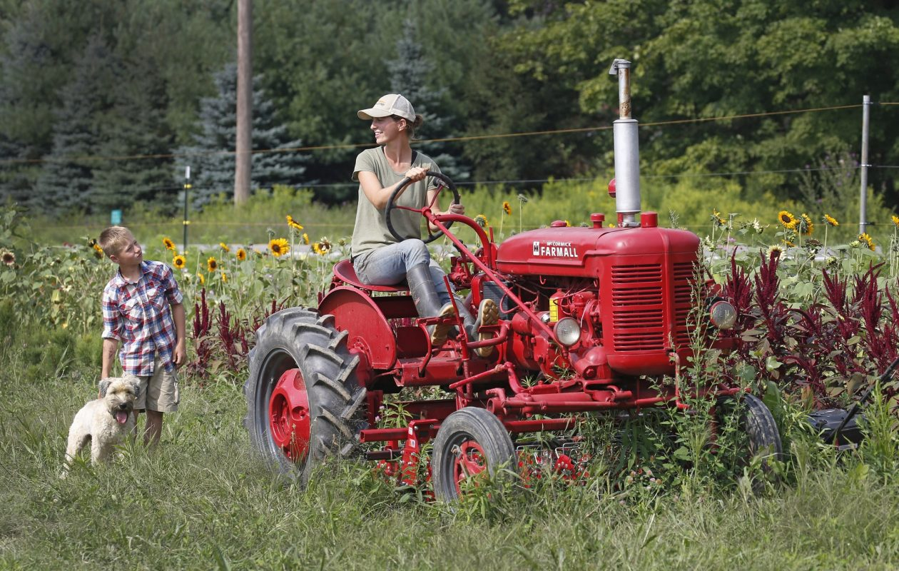 """Bringing people to Tioga Valley Farm, in West Falls, to pick up Community Supported Agriculture (CSA) farm shares is 'our favorite way to market vegetables,"""" says co-owner Beth Leipler, pictured last year aboard her 1948 Farmall tractor with son Dominic and Meesha, the family dog, nearby. (Robert Kirkham/News file photo)"""
