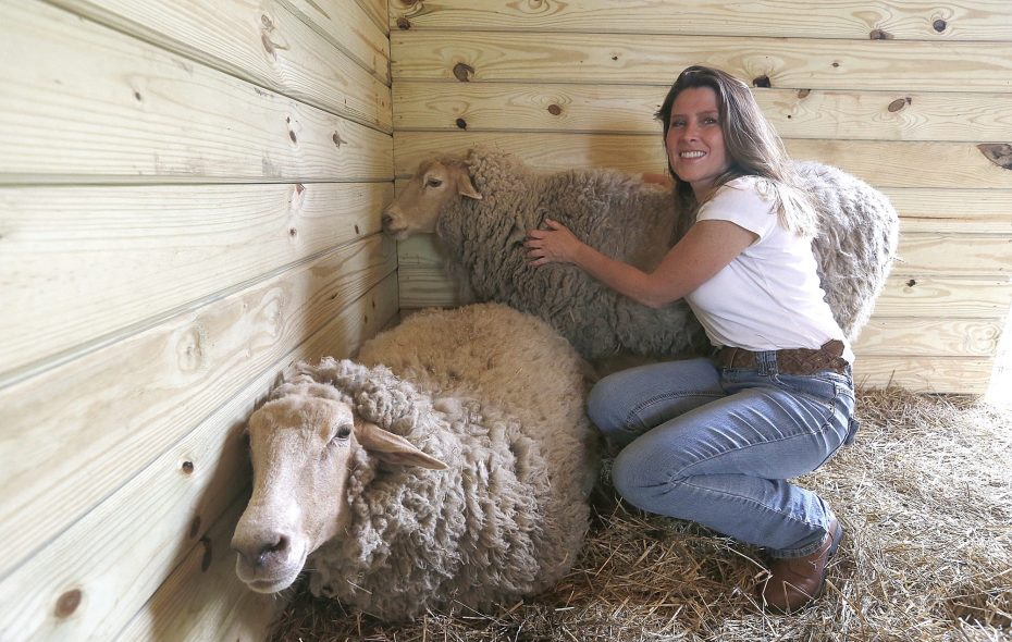 Tracy Murphy, founder and president of the Buffalo Vegan Society, also runs the 27-acre Asha's Sanctuary for animals spared of slaughter in Niagara County. The sheep at the sanctuary are named Tracy, left, and Anu. (Robert Kirkham/Buffalo News)