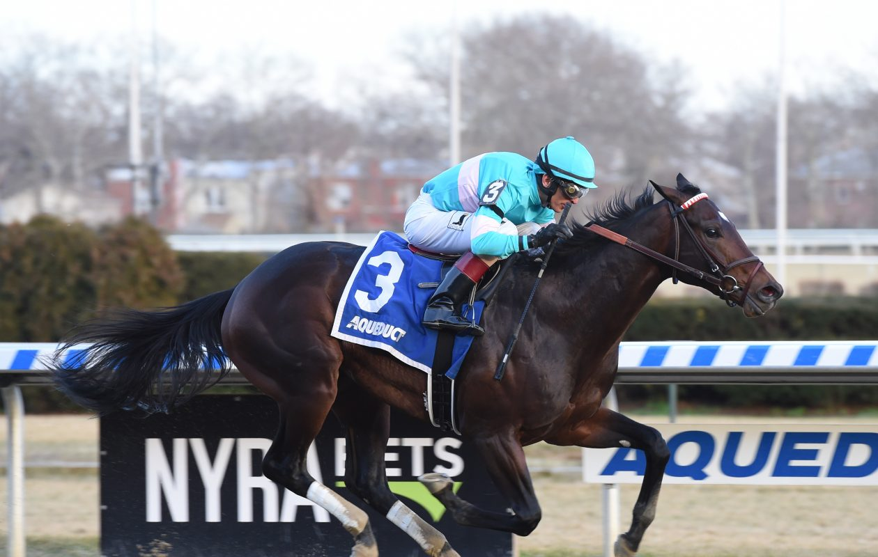 Mind Control, winner of the Jerome, tries the Gotham this weekend at Aqueduct. Photo Credit: Susie Raisher/NYRA