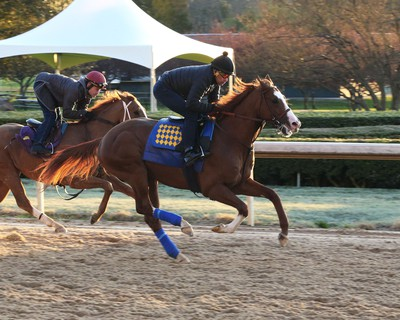 Improbable is the favorite in the Arkansas Derby. Photo Credit: Coady Photography