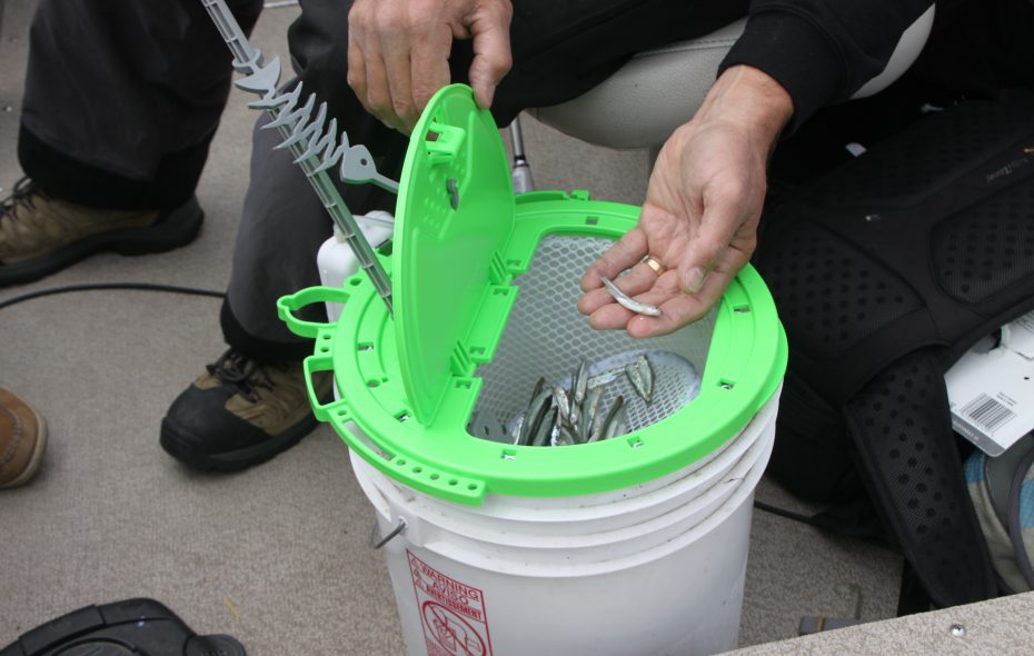 This revolutionary Bait Butler makes it easier to grab minnows, young and old alike. (Bill Hilts Jr./Buffalo News)