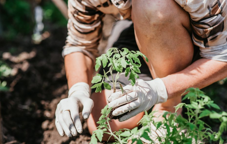 Early season gardening is greatly dependent on the weather, and this spring has been challenging. Here are some tips for making up for lost time.