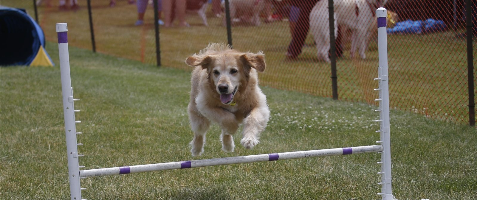 Bring your dog to a few events this June catered to them. (Robert Kirkham/Buffalo News)