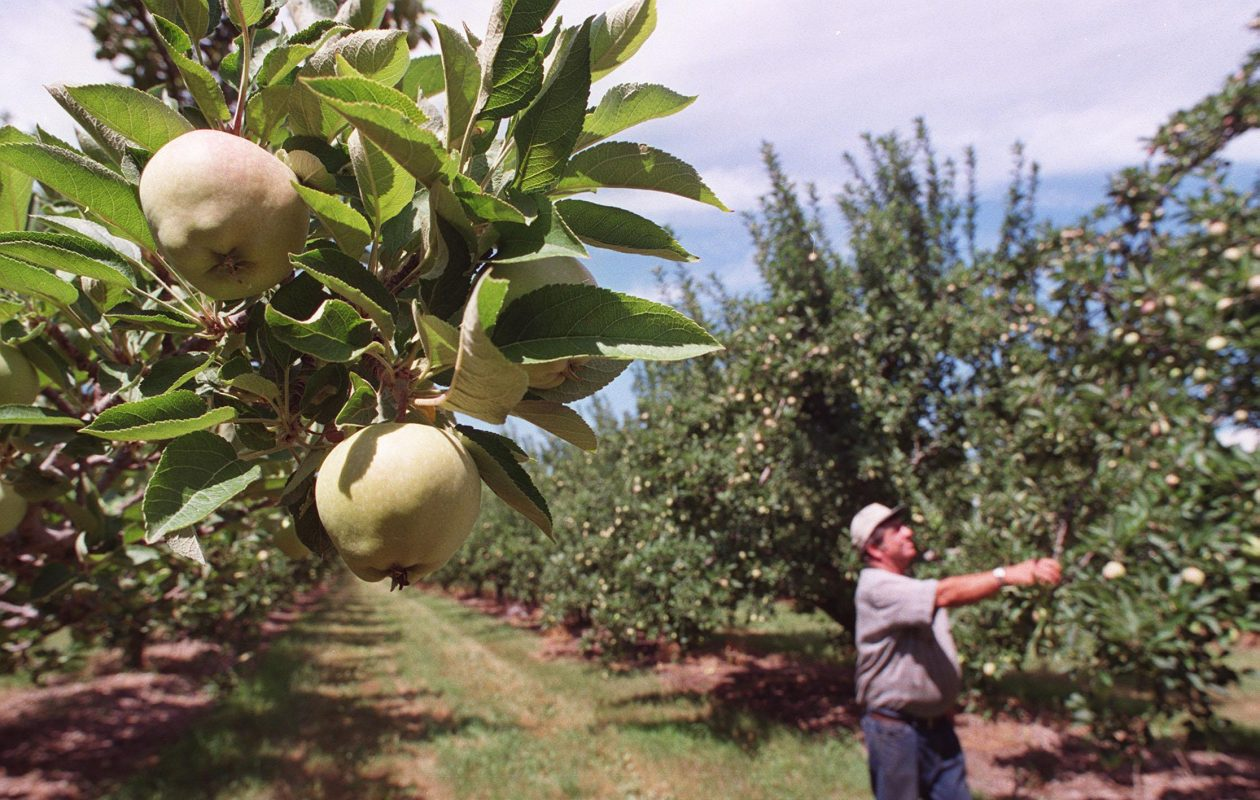 The proposed Farmworker Fair Labor Practices Act, as it is written, could devastate New York farmers. (Sharon Cantillon/News file photo)