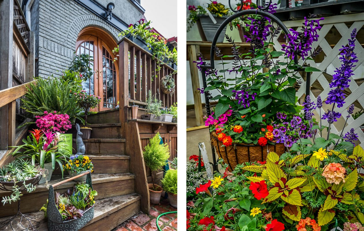 For the 2019 Junior League of Buffalo Decorators' Show House, Trillium Courtyard Florist transformed the side porch into a vibrant container garden. If you're feeling overwhelmed or unsure of plant pairings, look no further than the expertly curated containers from  Zehr's on the Lake for guidance. (Matt Digati / Alicia Wittman)