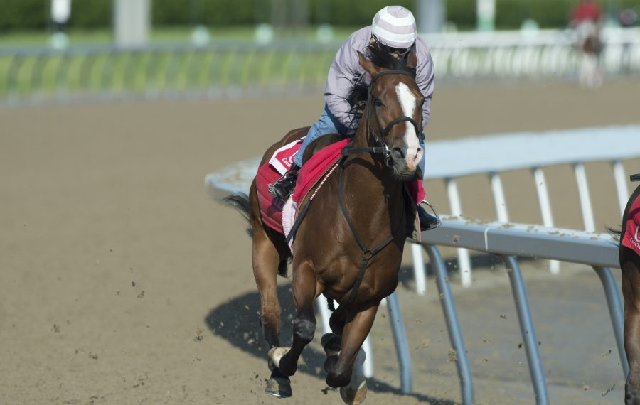 Skywire is a top contender in this year's Queen's Plate. Photo Credit: Michael Burns Photo/Woodbine