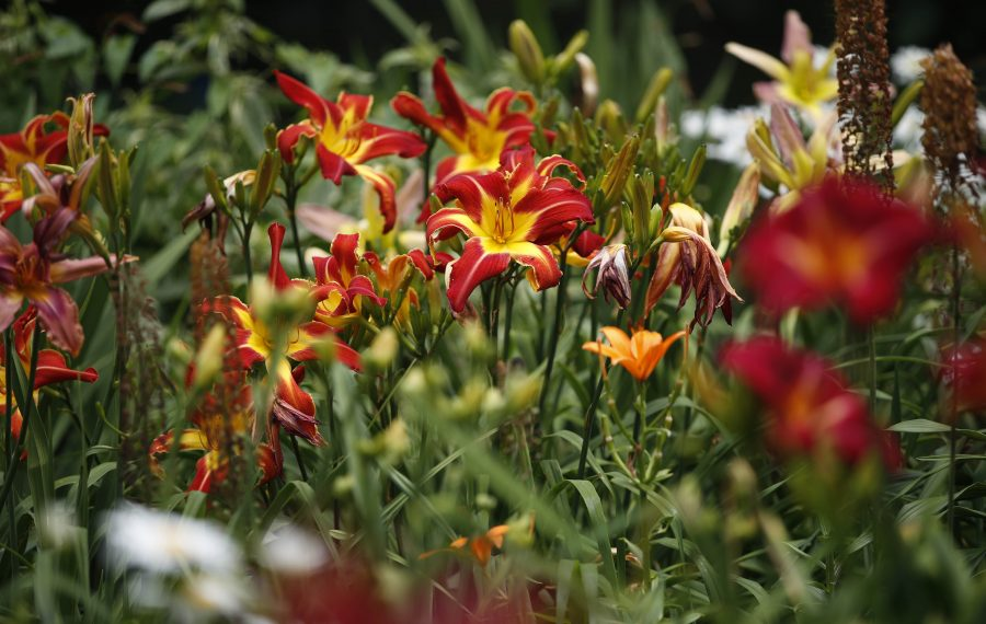 A Lockport garden in  bloom. (Sharon Cantillon/News file photo)