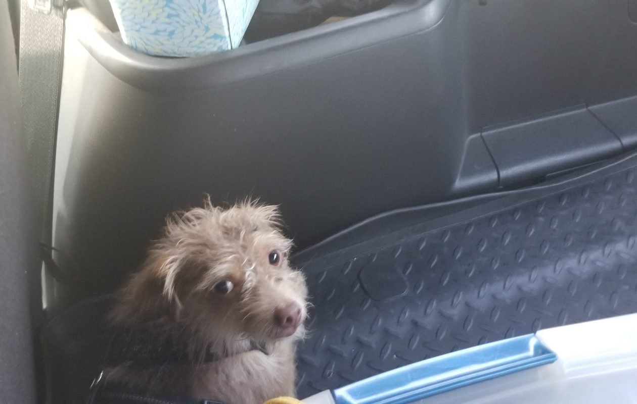 Dog that ran from crash found a mile away by Buff State police chief