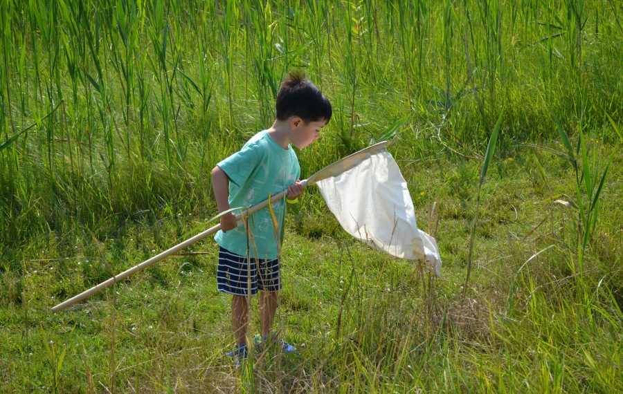 """Sweep netting"" is how children collect bugs from the grass at Insectival, the annual festival all about insects at Tifft Nature Preserve. (Provided photo)"