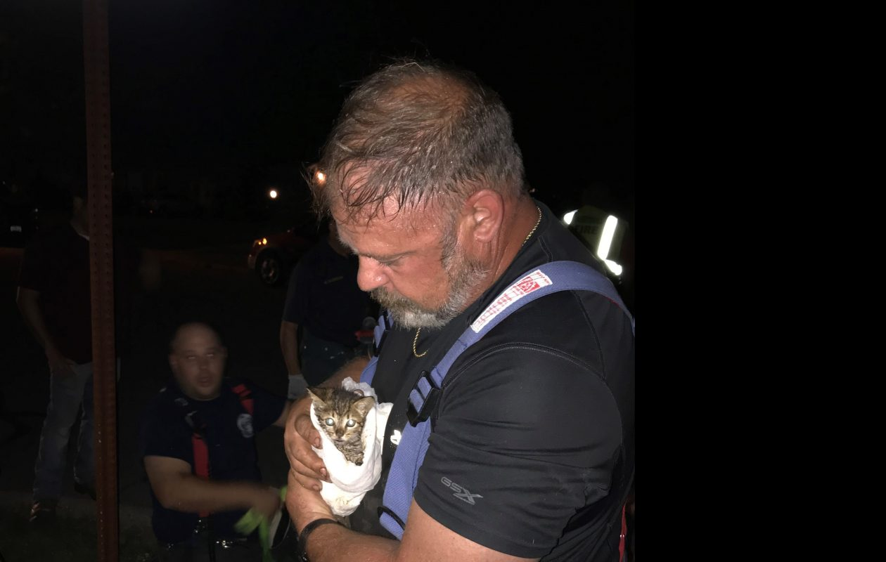 Eggertsville firefighters rescue kitten trapped in storm sewer