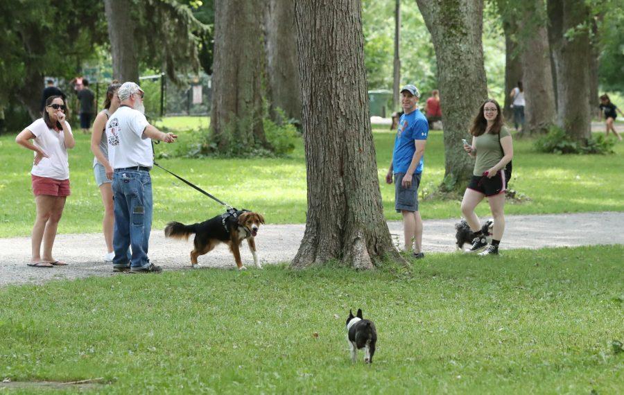 Dog-owners walk their pets at the Bark Park Picnic at Ellicott Island Bark Park in Tonawanda, on Sunday, Aug. 11, 2019.  (James P. McCoy/Buffalo News)