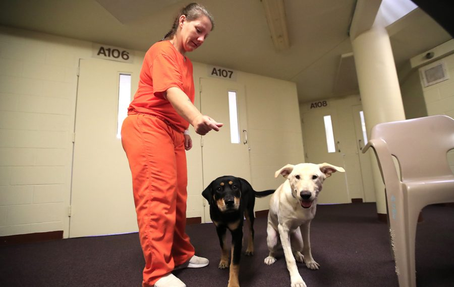 Angela Baughman an inmate at the Erie County Correctional Facility works with Leo and Athena training a SPCA rescue dogs on Tuesday, July 30, 2019. (Harry Scull Jr./Buffalo News)