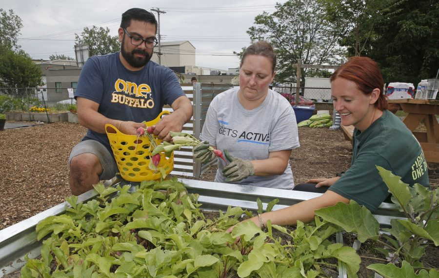 FeedMore WNY Garden coordinator Marla Ryan, right, works with Ingram Micro volunteers Brandon Rivera, left, and Danielle Vaillancourt to harvest radishes at the Food Bank side of the joint operation, which also includes Meals on Wheels for WNY. The merger took place in February. In coming months, residents in the region will start to notice some program expansion. (Robert Kirkham/Buffalo News)