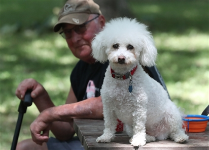 Many dogs enjoyed running free around the spacious grounds of the Bark Park at Ellicott Island Park in the Town of Tonawanda. At least eight dog parks have opened around the region since 2007, when the Barkyard at LaSalle Park opened.