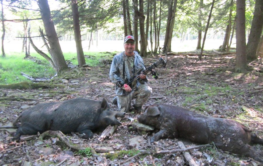 Bowhunter Joe Famiglietti shows off the two Russian boars he harvested at Tioga Ranch in Tioga, Pa. (Photo courtesy of Joe Famiglietti)