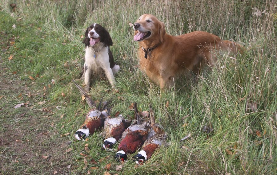 The Three-F Club will be holding a special Youth Mentor Day that also includes a pheasant hunt on Sept. 14 at the club in Lewiston. (Bill Hilts, Jr./Buffalo News)