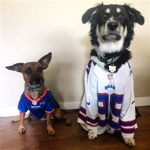 Are you (or your pet) decked out in red, white and blue Zubaz, your favorite Bills jersey or other Bills gear? Share your Bills fan selfies and game day photos with us and you could be featured on BuffaloNews.com. Please include when and where the photo was taken, who's in the photo and your first and last name (for photo credit) for caption information. Submit your photos at: https://bnblitz.tumblr.com/submit