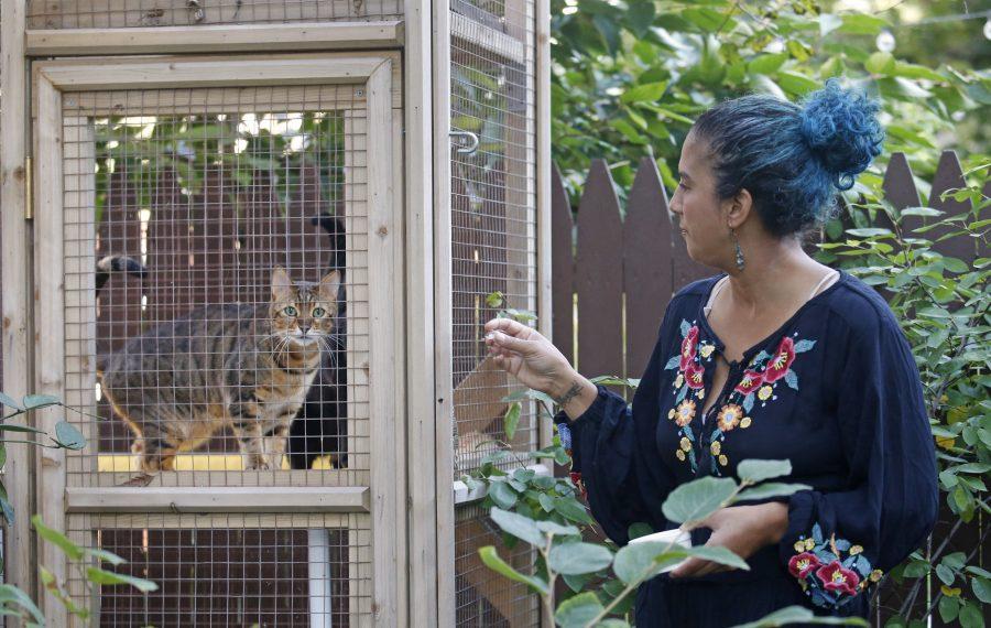 Johanna C. Dominguez's garden was on Garden Walk Buffalo this summer. The catio – an enclosed patio for her friendly felines – was just one highlight. (Robert Kirkham/Buffalo News)