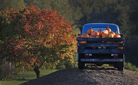 The popular fall getaway called Pumpkinville near Ellicottville in Great Valley is a fun family day in mid-October. Homemade baked goods, farm animals, amusement rides, barbecue, honey and, of course, pumpkins can all be found there.