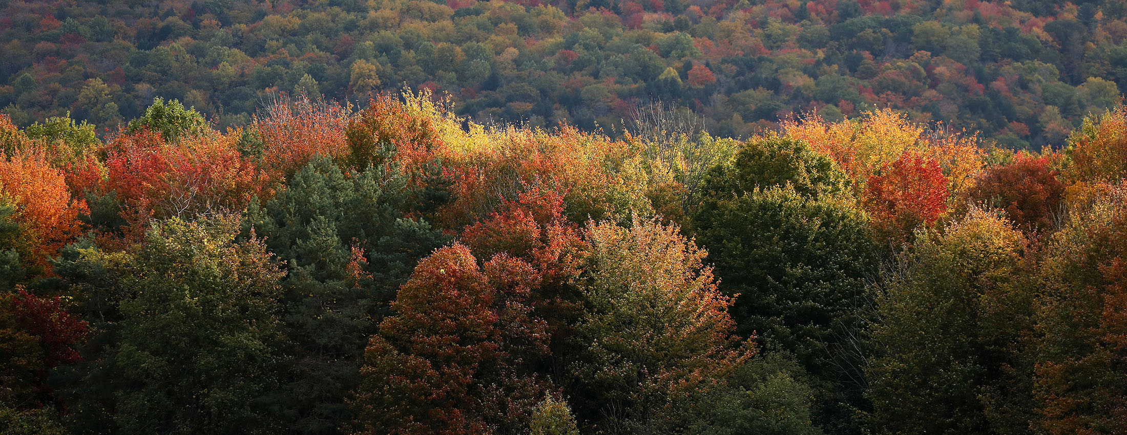 Fall colors spread through the tree line off of Zimmerman Road in the Town of Boston on Oct. 18. (Mark Mulville/Buffalo News)