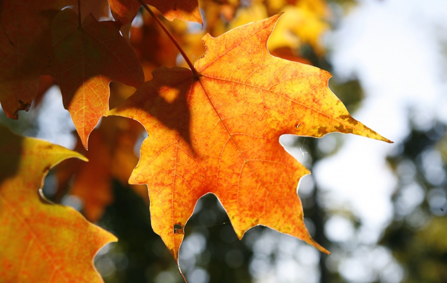 The leaves are changing colors, but there are still outdoor jobs to do in the garden. (Sharon Cantillon/News file photo)