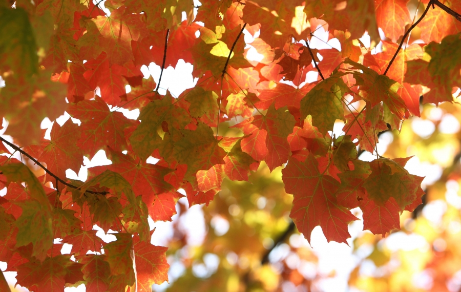 After changing color, the leaves will fall – and streets crews will have to pick them up. (Sharon Cantillon/News file photo)