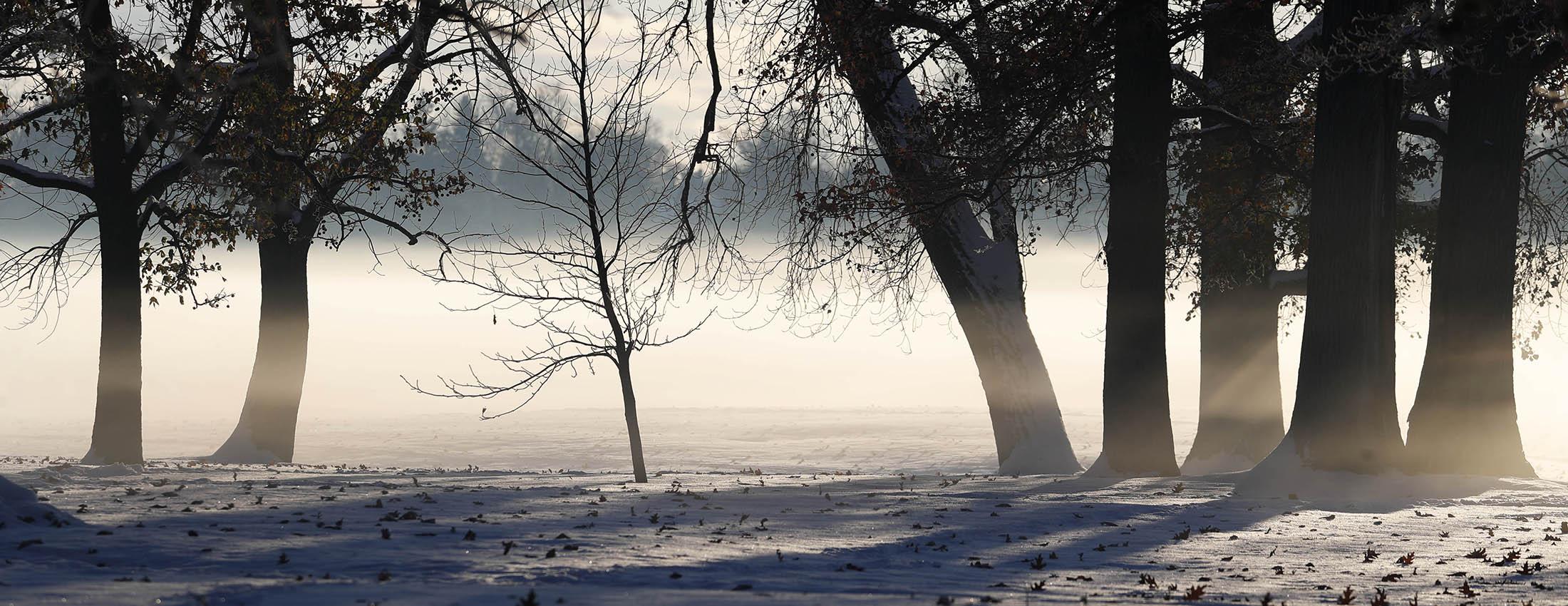 Sun shines through a morning fog at Delaware Park on Nov. 13. (Sharon Cantillon/Buffalo News)