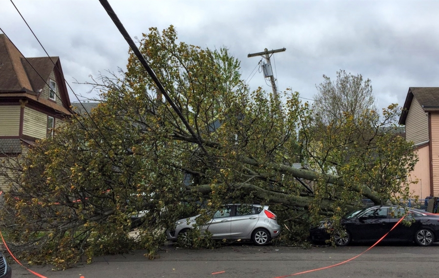 One single tree fell on three cars and a house at 14th and York streets in the West Side. (Keith McShea/Buffalo News)