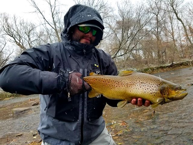 Matt C. was hitting some Lake Ontario tributaries this week, fishing with Scott Feltrinelli of Ontario Fly Outfitters. They caught some nice brown trout in the process. (Photo courtesy of Scott Feltrinelli)