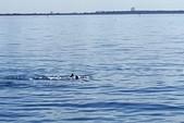 40 ft. Jeanneau Sailboats Sun Odyssey 409 Cruiser Boat Rental Tampa Image 2