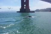 33 ft. Seawind 1000 Catamaran Boat Rental San Francisco Image 29