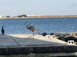 32 ft. Other Friendship sloop Sloop Boat Rental San Diego Image 16