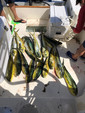 25 ft. Contender Boats 25 Tournament Center Console Boat Rental Miami Image 10