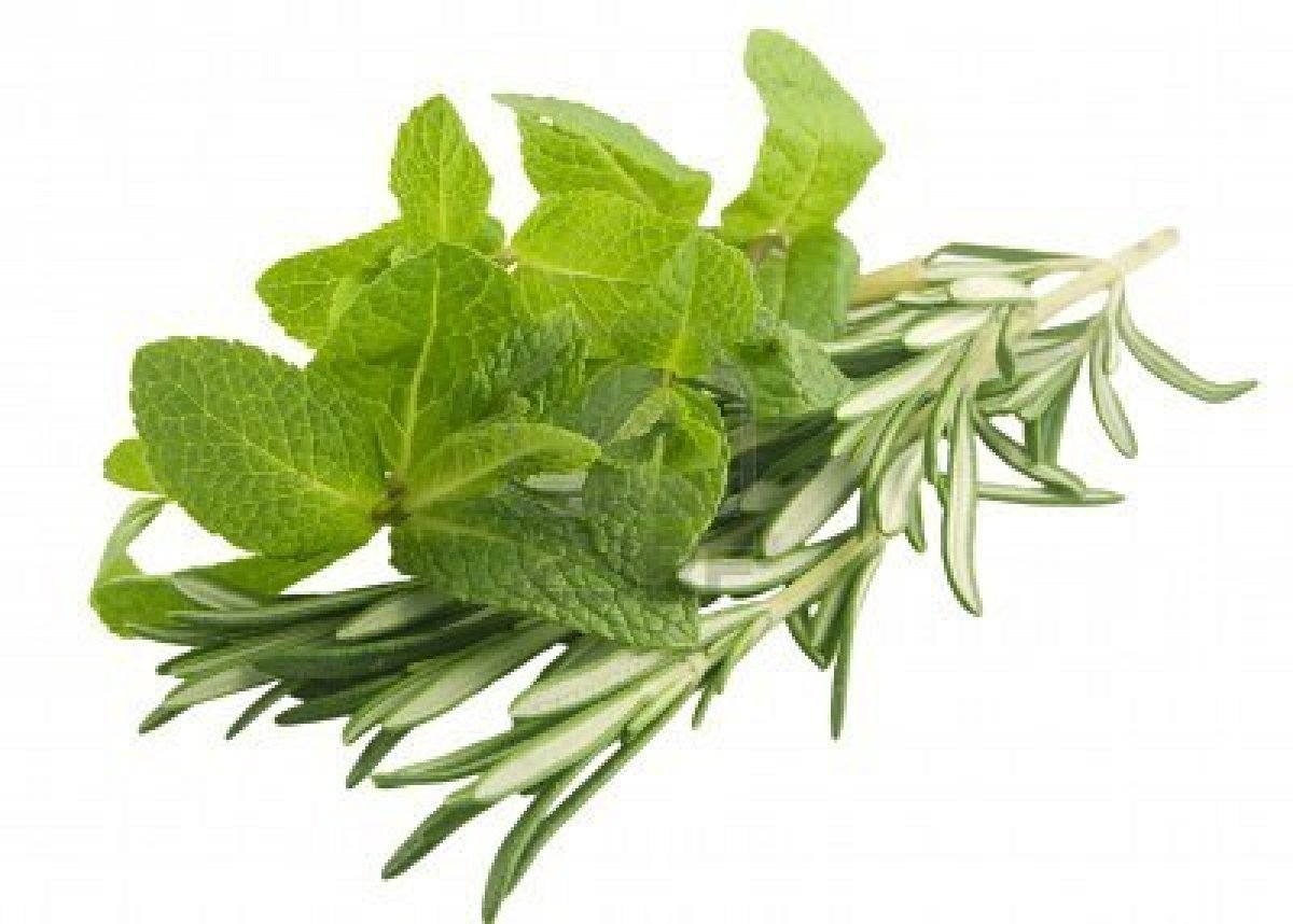 Rosemary Mint Shower Gel Body Washes Amp Shower Gels