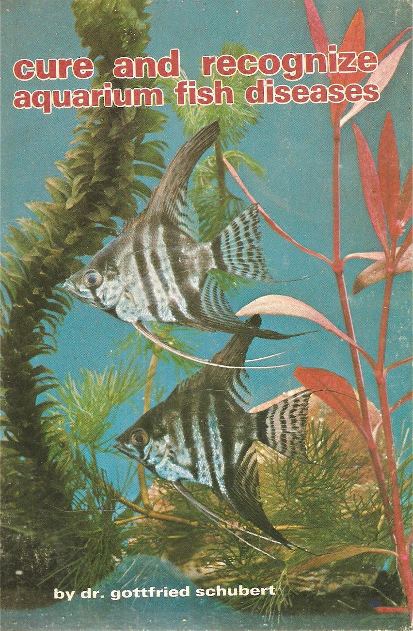 Tropical fish tank maintenance diseases 2017 fish tank for Tropical fish diseases