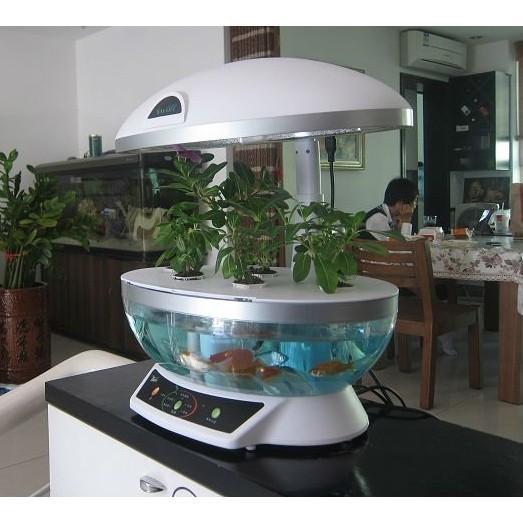 Aquaponics system fish tank aquarium organic hydroponic for Aquaponics fish tank kit