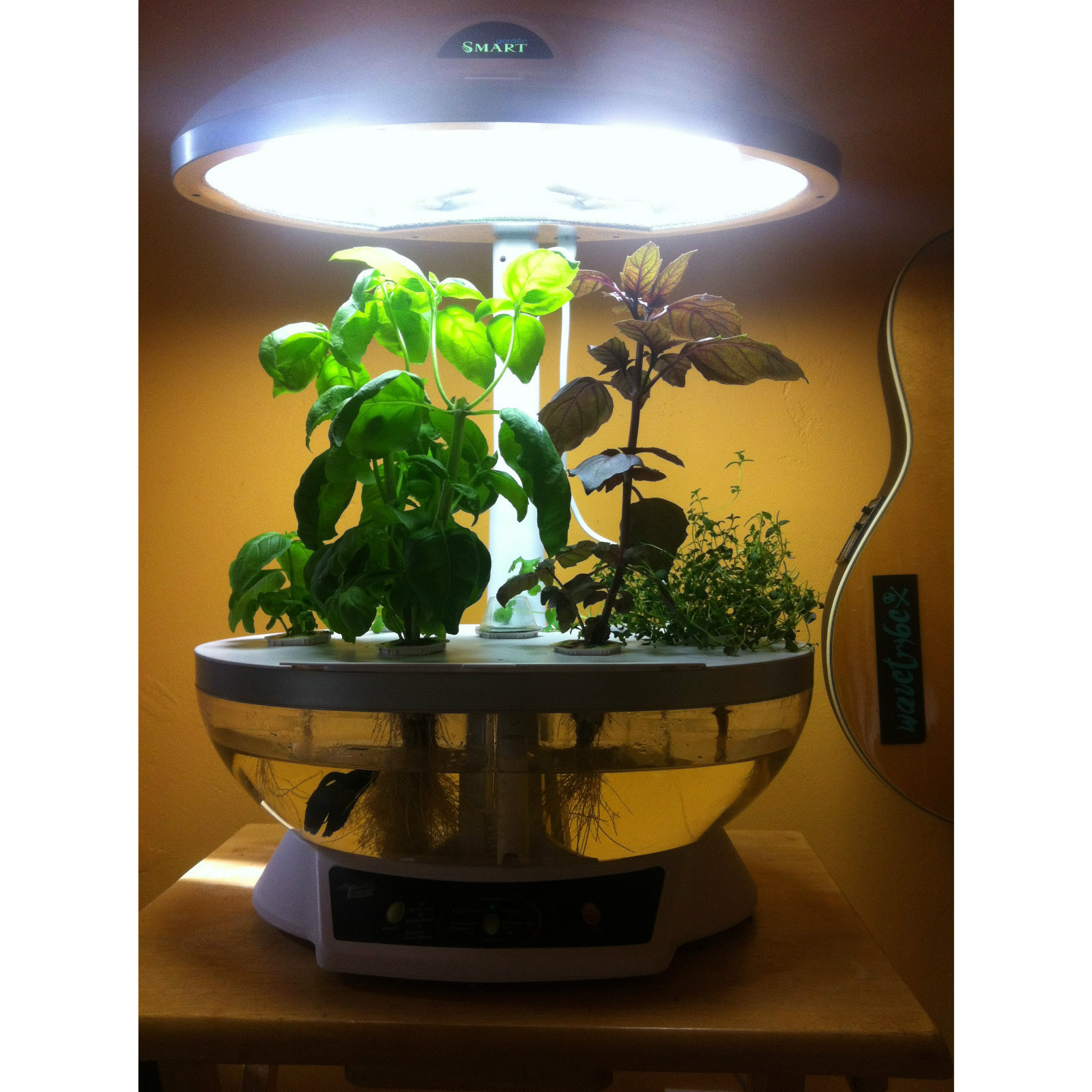 Aquaponics system fish tank aquarium planter grow light for How to grow hydro in a fish tank