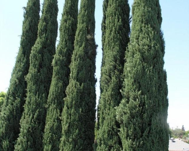 Cypress freebies