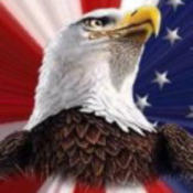 Bald-eagle-stars-and-stripes_thumb175