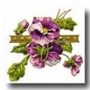Purple-flowers-5-tn_thumb175